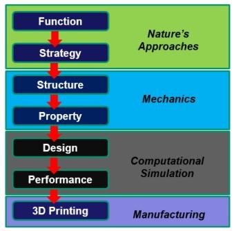 Biomimeticdesignforam